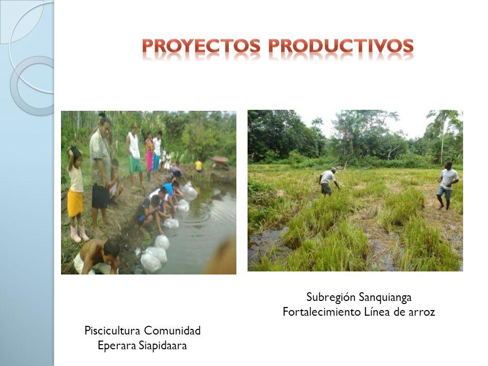 Piscicultura Comunidad Eperara Siapidaara Subregión Sanquianga Fortalecimiento Línea de arroz