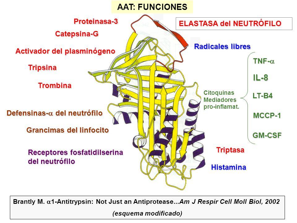 ELASTASA del NEUTRÓFILO Proteinasa-3 Catepsina-G Defensinas- del neutrófilo Activador del plasminógeno Tripsina TNF- TNF- IL-8 LT-B4 MCCP-1 GM-CSF Grancimas del linfocito Triptasa Receptores fosfatidilserina del neutrófilo Histamina Brantly M.
