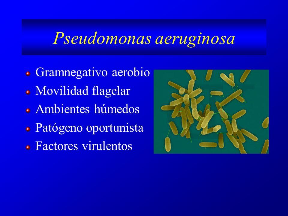 Factores virulentos (I) ElementoActividad Quimiotaxis y motilidad Fimbrias, adhesinas, flagelo Adhesión Infección Enzimas hidrolíticasDegradación Alginato(exopolisacárido)CEPAS MUCOIDES Gel viscoso Protege de fagocitosis Sistemas transporte al exterior Eflux MFS ( major facilitator superfamily) Eliminar Abs y solventes orgánicos Exotoxinas S, T, Y Bloquean transducción de señales en cél infectada