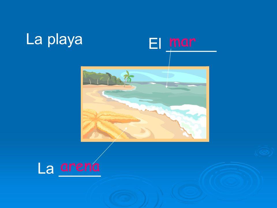 El ______ La _____ La playa arena mar