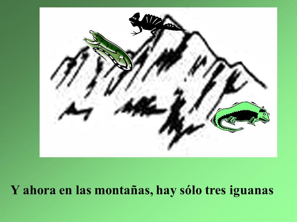 4. La iguana más gorda se quedó sorda