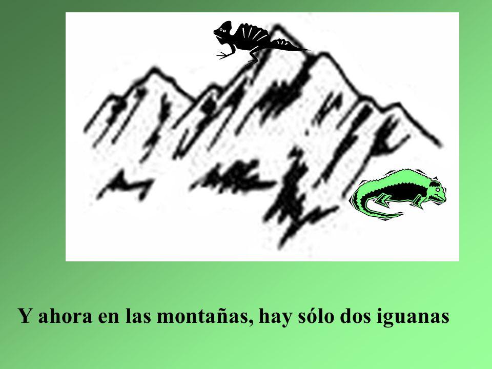 5. La iguana más delgada la hicieron ensalada