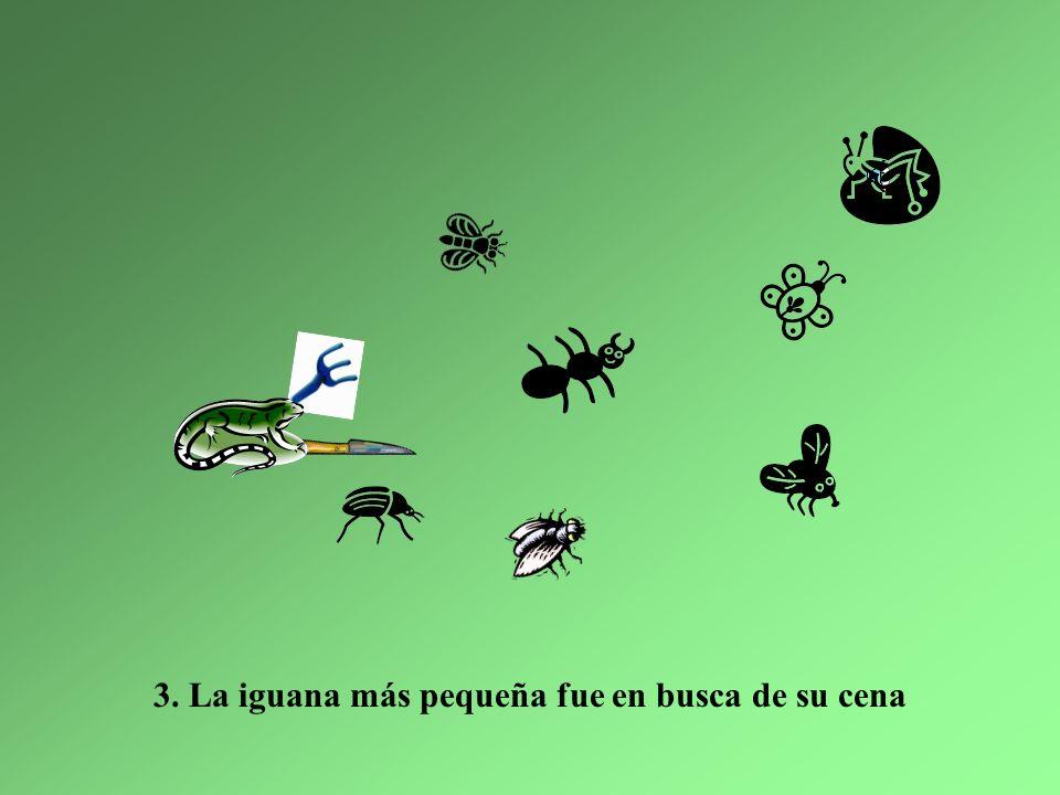 Y ahora en las montañas, hay sólo cinco iguanas