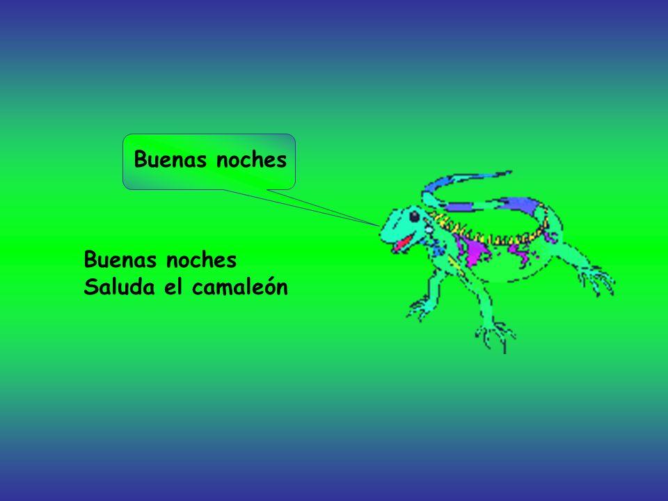 Buenas noches Saluda el camaleón