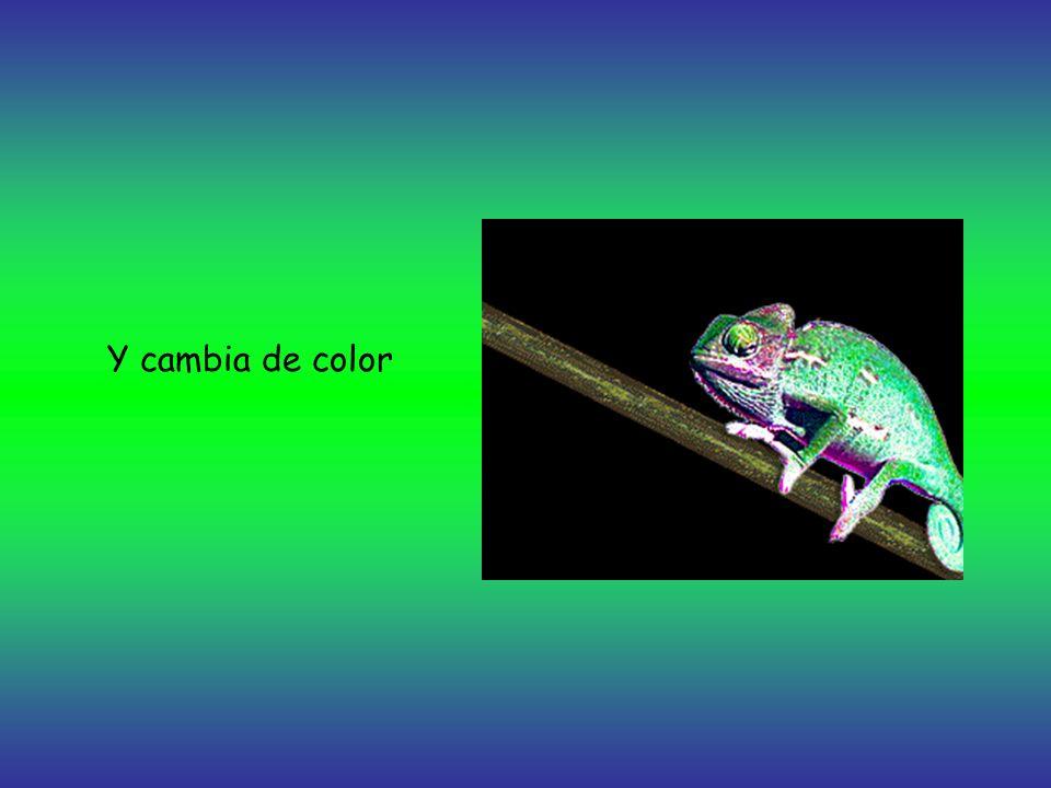 Y cambia de color