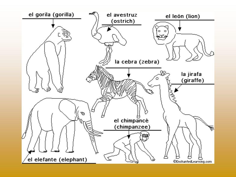 Ziggy, la cebra/zebra Stretch, el avestruz