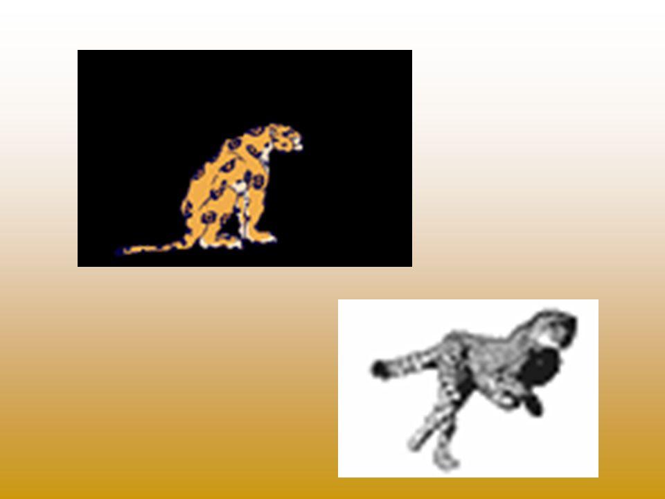 El avestruz Los rinocerontes Las cebras El elefante La jirafa El león Los leopardos El hipopótamo