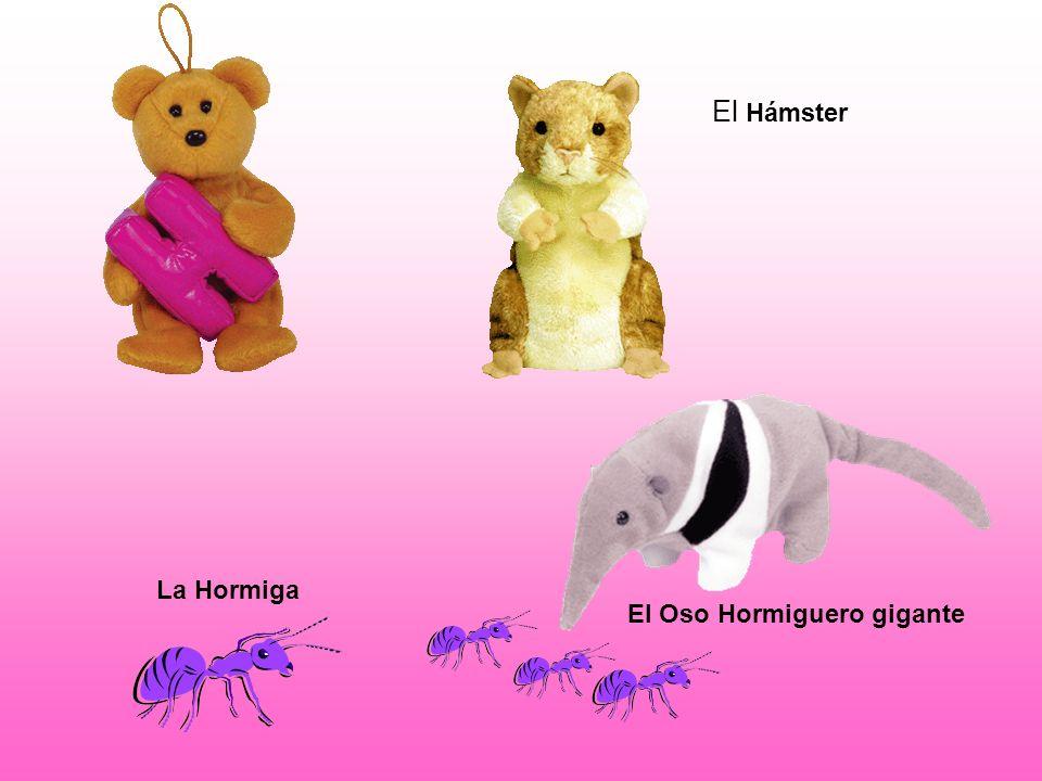 El Oso Hormiguero gigante La Hormiga El Hámster