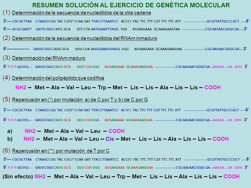 RESUMEN SOLUCIÓN AL EJERCICIO DE GENÉTICA MOLECULAR 3--- CGCGCTTAA CTAAGCCGG TAC CGT(**) CAA GAT TTACCTTAAATCC ACC(*) TAC TTC TTT CGT TTC TTC ATT ----