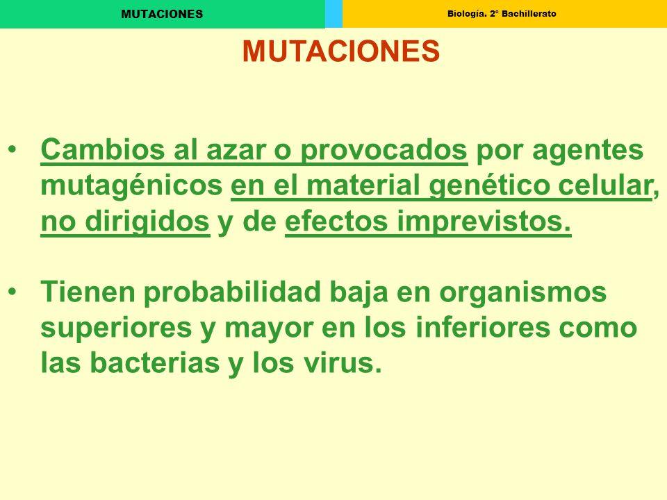 Biología. 2º Bachillerato MUTACIONES Cambios al azar o provocados por agentes mutagénicos en el material genético celular, no dirigidos y de efectos i