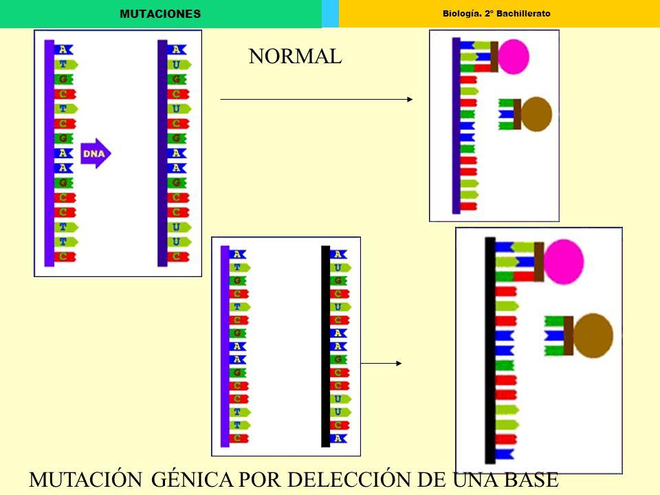 Biología. 2º Bachillerato MUTACIONES MUTACIÓN GÉNICA POR DELECCIÓN DE UNA BASE NORMAL