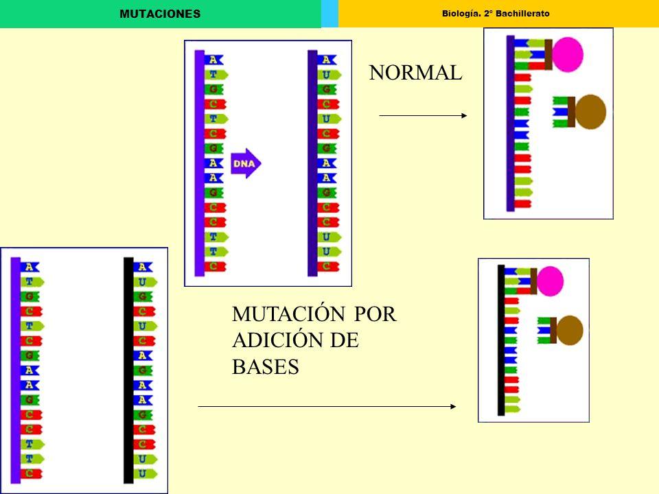 Biología. 2º Bachillerato MUTACIONES NORMAL MUTACIÓN POR ADICIÓN DE BASES