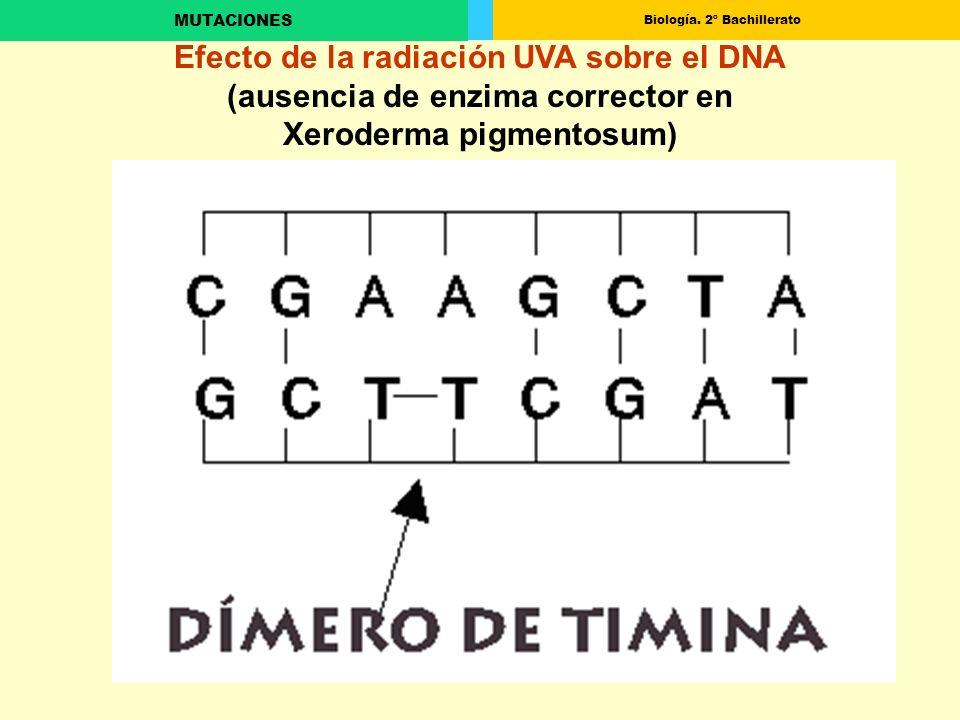 Biología. 2º Bachillerato MUTACIONES Efecto de la radiación UVA sobre el DNA (ausencia de enzima corrector en Xeroderma pigmentosum)
