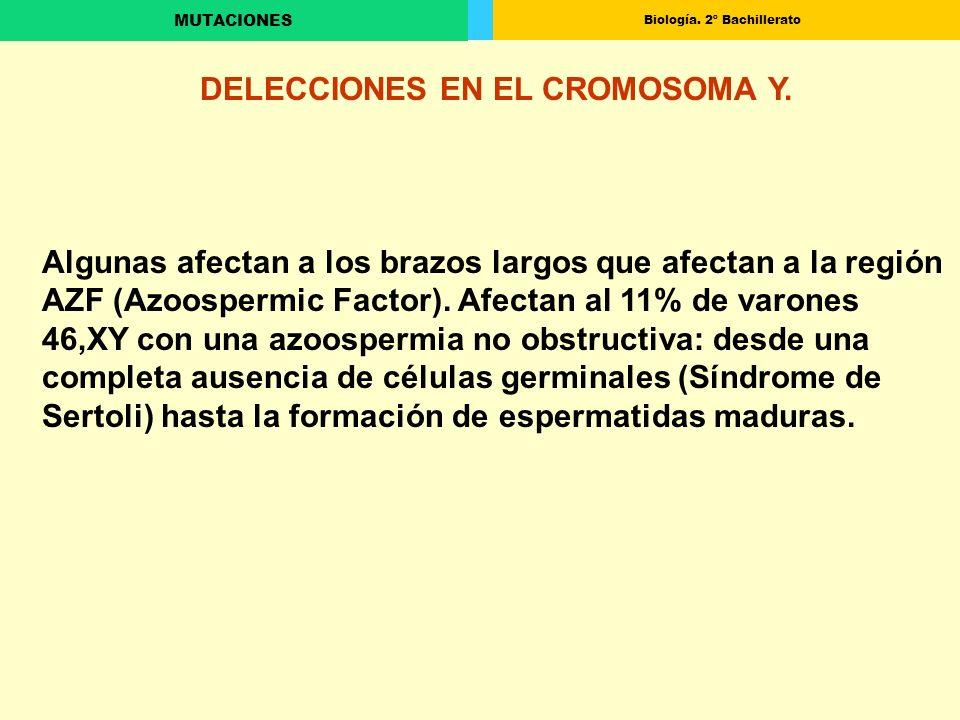Biología. 2º Bachillerato MUTACIONES DELECCIONES EN EL CROMOSOMA Y. Algunas afectan a los brazos largos que afectan a la región AZF (Azoospermic Facto