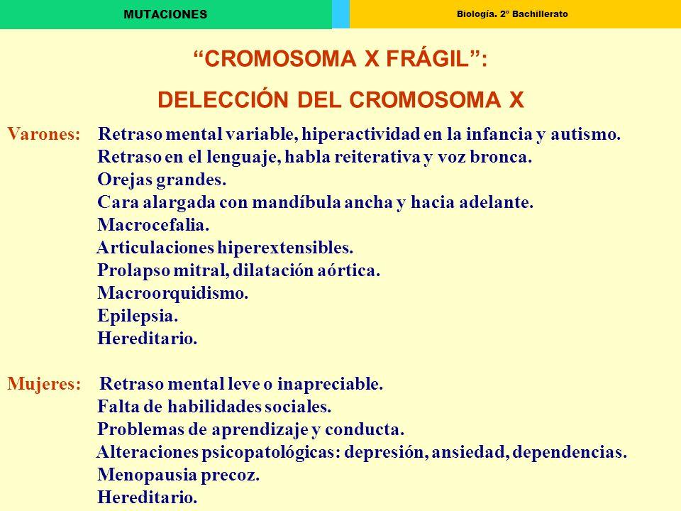 Biología. 2º Bachillerato MUTACIONES CROMOSOMA X FRÁGIL: DELECCIÓN DEL CROMOSOMA X Varones: Retraso mental variable, hiperactividad en la infancia y a