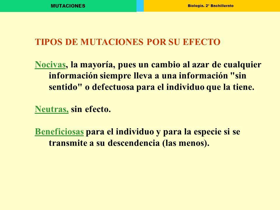 Biología. 2º Bachillerato MUTACIONES TIPOS DE MUTACIONES POR SU EFECTO Nocivas, la mayoría, pues un cambio al azar de cualquier información siempre ll