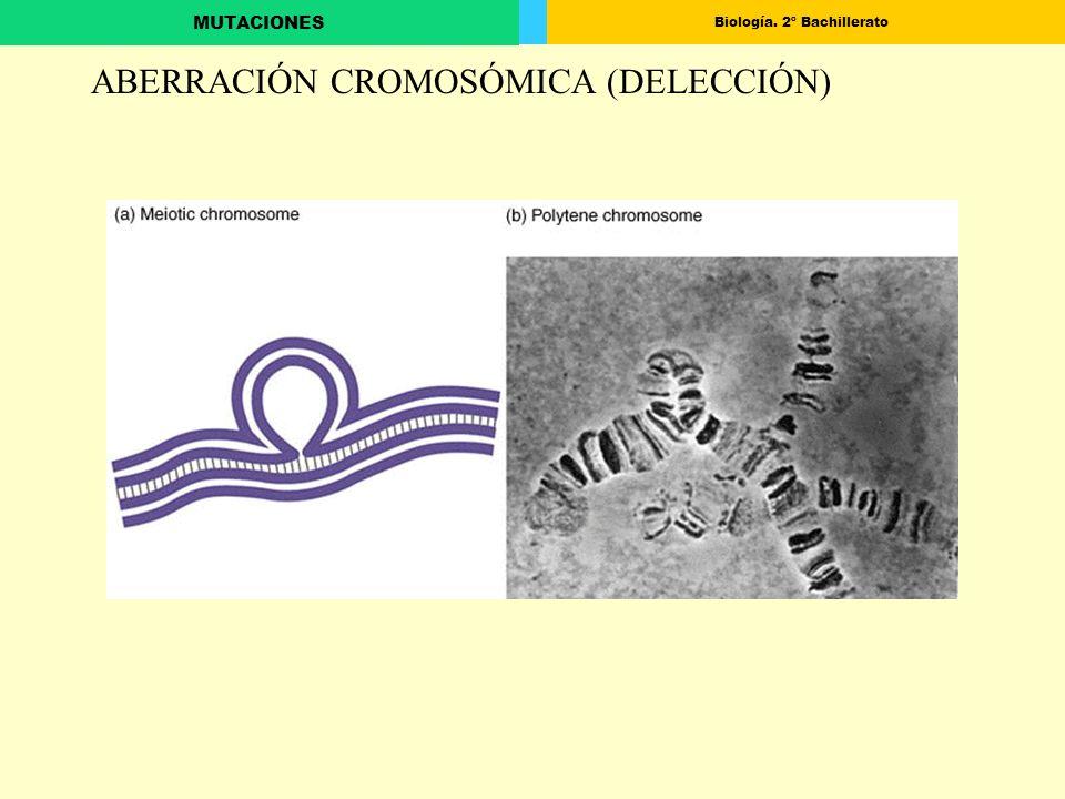 Biología. 2º Bachillerato MUTACIONES ABERRACIÓN CROMOSÓMICA (DELECCIÓN)
