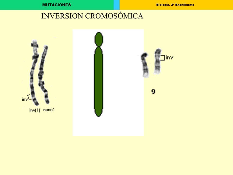 Biología. 2º Bachillerato MUTACIONES INVERSION CROMOSÓMICA
