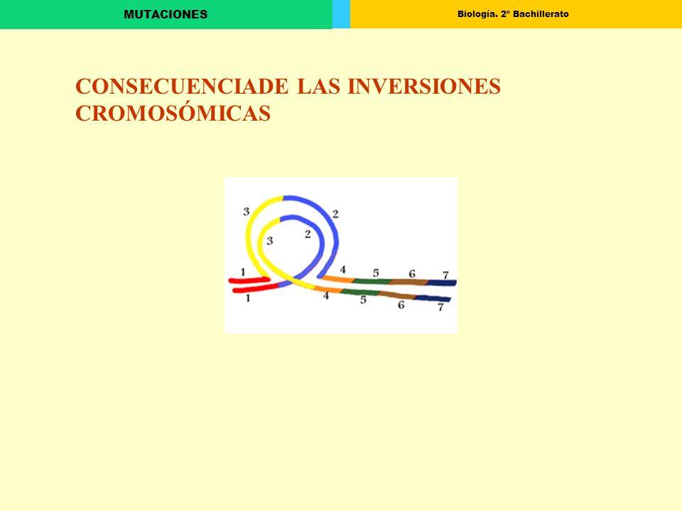 Biología. 2º Bachillerato MUTACIONES CONSECUENCIADE LAS INVERSIONES CROMOSÓMICAS