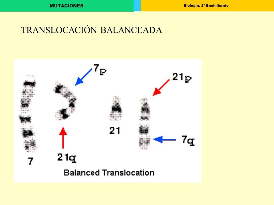 Biología. 2º Bachillerato MUTACIONES TRANSLOCACIÓN BALANCEADA