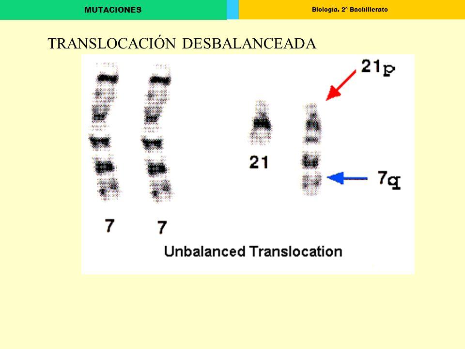 Biología. 2º Bachillerato MUTACIONES TRANSLOCACIÓN DESBALANCEADA