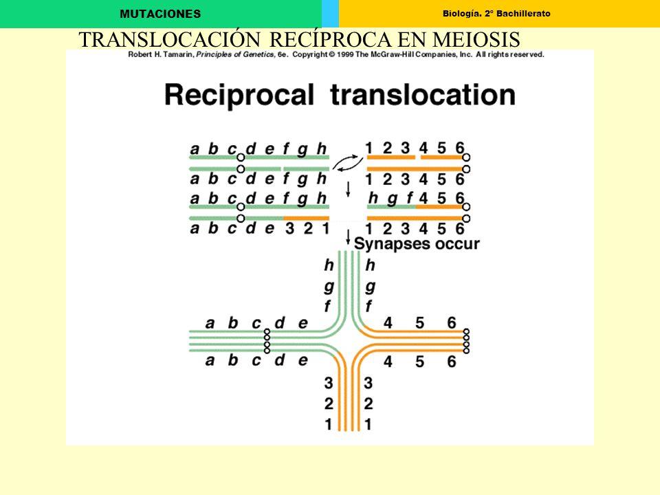 Biología. 2º Bachillerato MUTACIONES TRANSLOCACIÓN RECÍPROCA EN MEIOSIS