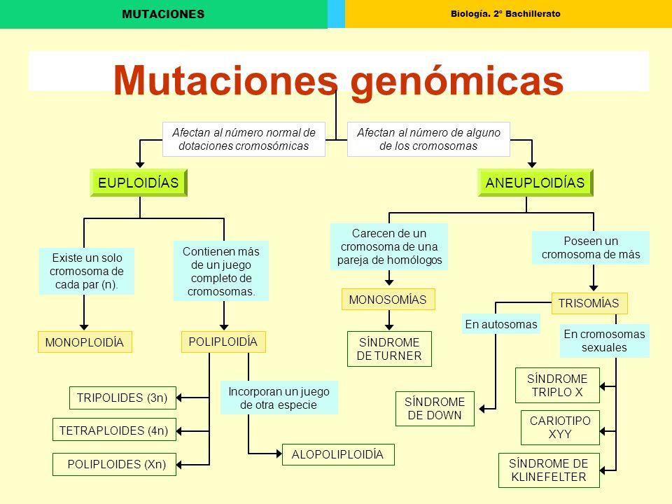 Biología. 2º Bachillerato MUTACIONES Mutaciones genómicas MONOPLOIDÍA Afectan al número normal de dotaciones cromosómicas Afectan al número de alguno
