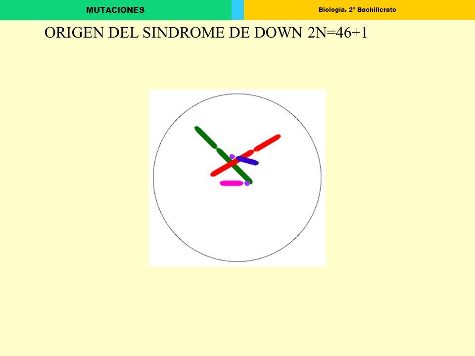 Biología. 2º Bachillerato MUTACIONES ORIGEN DEL SINDROME DE DOWN 2N=46+1