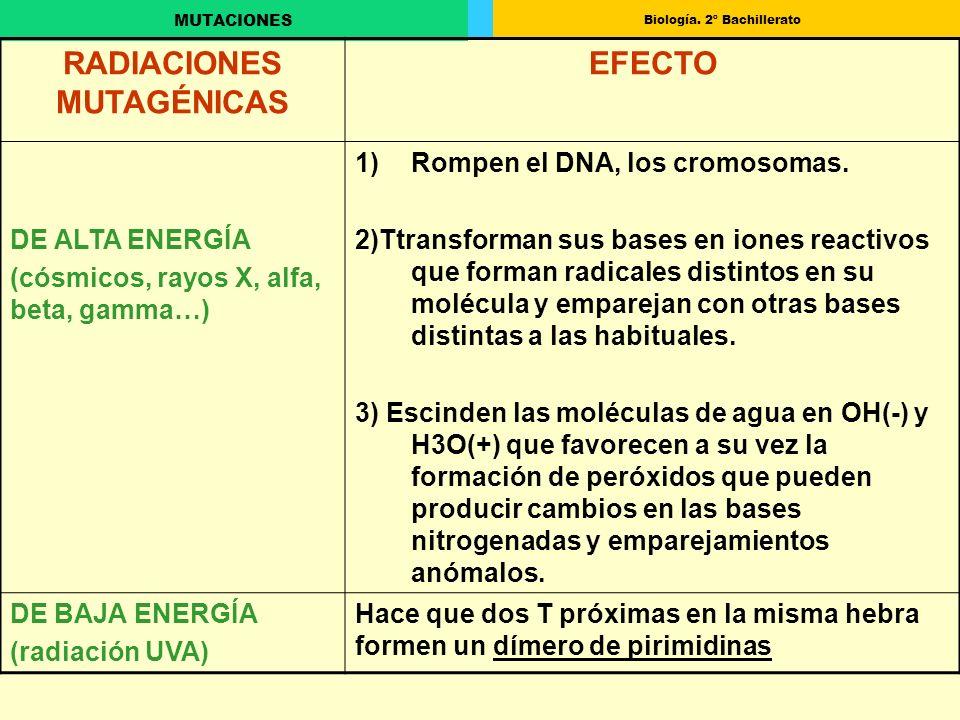 Biología. 2º Bachillerato MUTACIONES RADIACIONES MUTAGÉNICAS EFECTO DE ALTA ENERGÍA (cósmicos, rayos X, alfa, beta, gamma…) 1)Rompen el DNA, los cromo