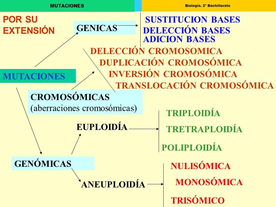 Biología. 2º Bachillerato MUTACIONES GENICAS CROMOSÓMICAS (aberraciones cromosómicas) GENÓMICAS SUSTITUCION BASES ADICION BASES DELECCIÓN BASES DELECC
