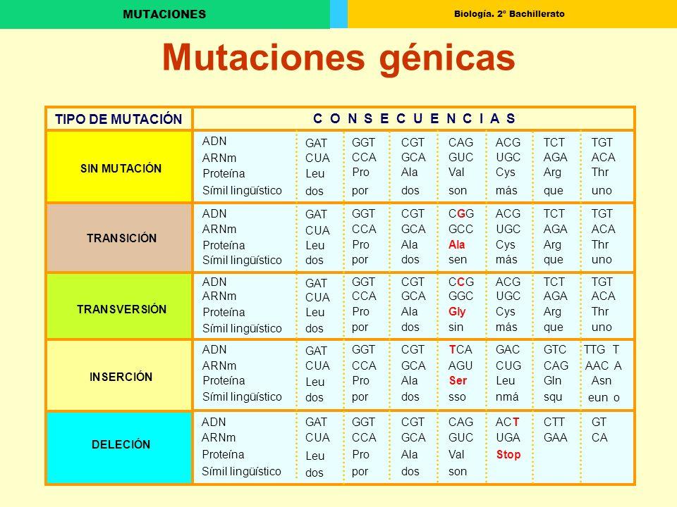 Biología. 2º Bachillerato MUTACIONES Mutaciones génicas ADN GAT GGTCGTCAGACGTCTTGTARNmCUA CCAGCAGUCUGCAGAACA TIPO DE MUTACIÓN C O N S E C U E N C I A