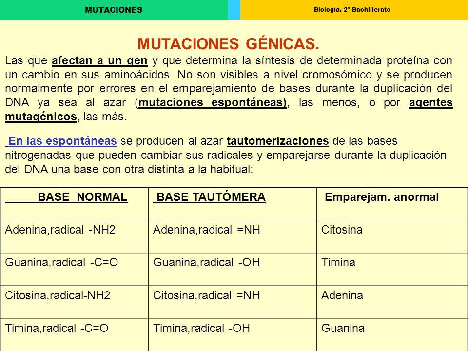 Biología. 2º Bachillerato MUTACIONES CONCEPTO DE TRANSLOCACION CROMOSÓMICA
