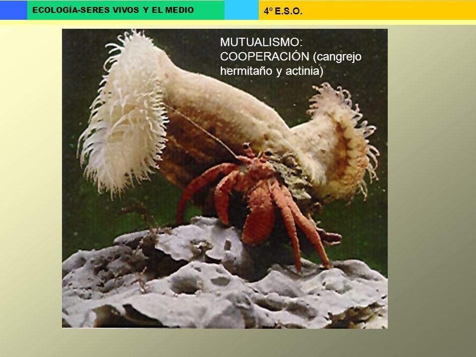 4º E.S.O. ECOLOGÍA-SERES VIVOS Y EL MEDIO MUTUALISMO: COOPERACIÓN (cangrejo hermitaño y actinia)