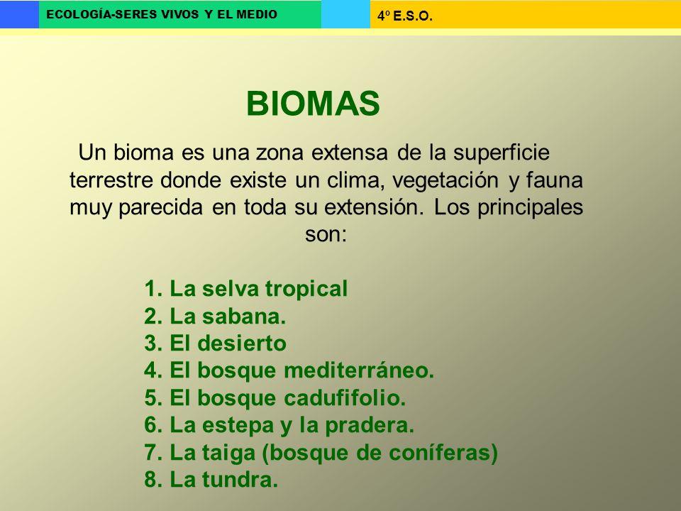 4º E.S.O. ECOLOGÍA-SERES VIVOS Y EL MEDIO Un bioma es una zona extensa de la superficie terrestre donde existe un clima, vegetación y fauna muy pareci