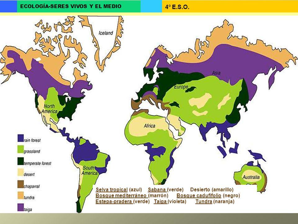 4º E.S.O. ECOLOGÍA-SERES VIVOS Y EL MEDIO Selva tropical (azul) Sabana (verde) Desierto (amarillo) Bosque mediterráneo (marrón) Bosque cadufifolio (ne