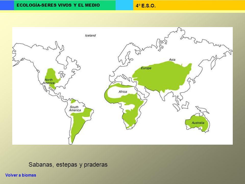 4º E.S.O. ECOLOGÍA-SERES VIVOS Y EL MEDIO Sabanas, estepas y praderas Volver a biomas