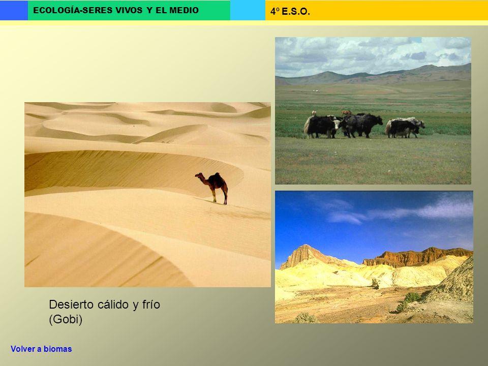 4º E.S.O. ECOLOGÍA-SERES VIVOS Y EL MEDIO Desierto cálido y frío (Gobi) Volver a biomas