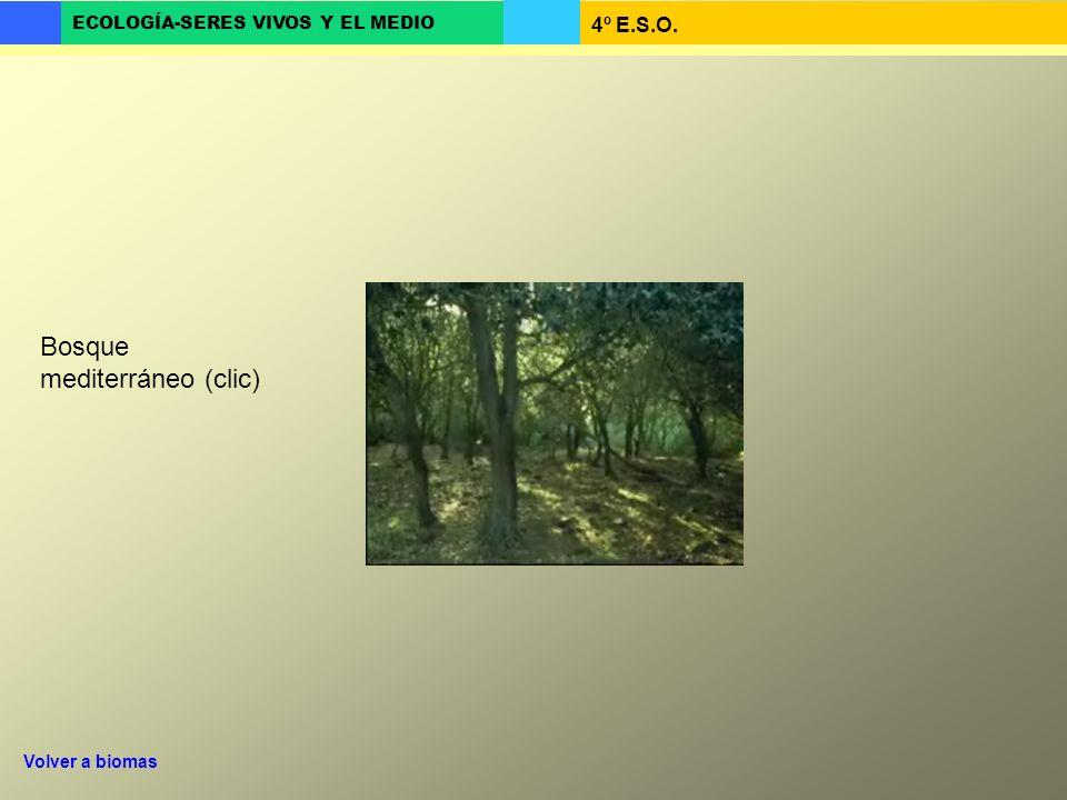 4º E.S.O. ECOLOGÍA-SERES VIVOS Y EL MEDIO Bosque mediterráneo (clic) Volver a biomas