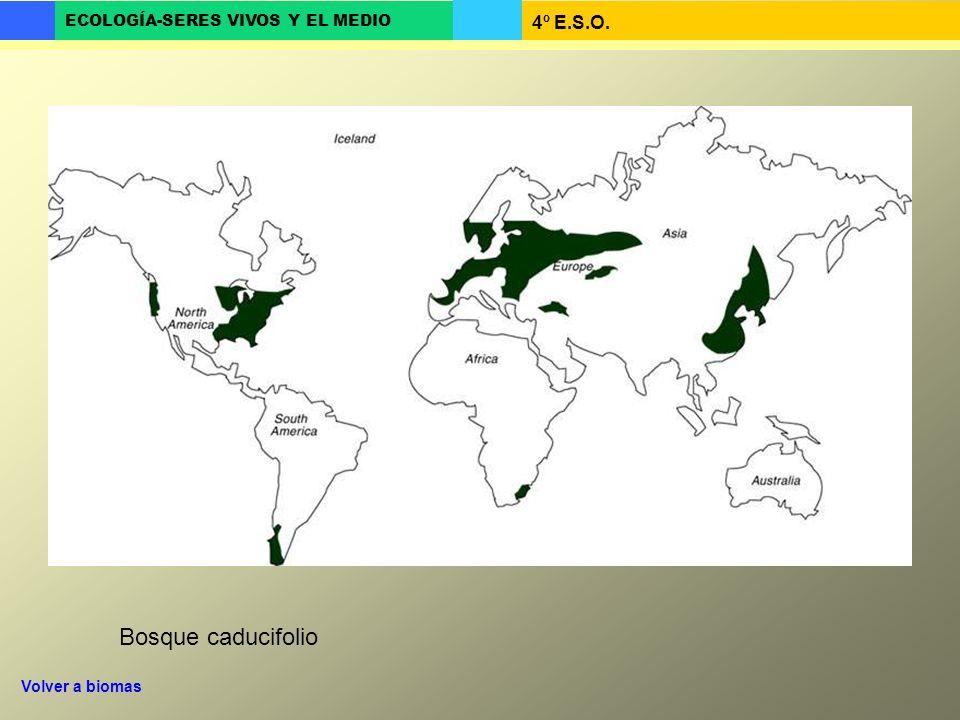 4º E.S.O. ECOLOGÍA-SERES VIVOS Y EL MEDIO Bosque caducifolio Volver a biomas