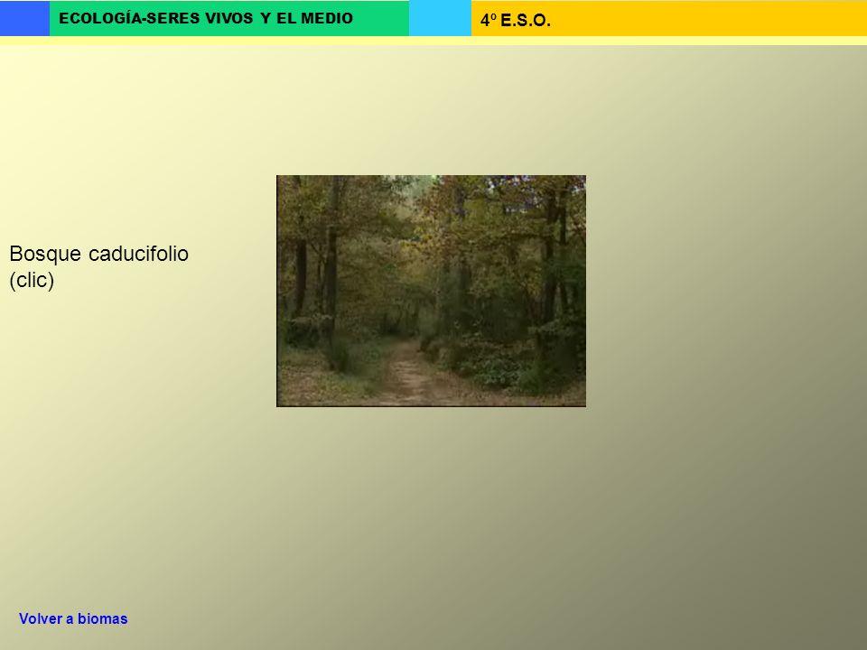 4º E.S.O. ECOLOGÍA-SERES VIVOS Y EL MEDIO Bosque caducifolio (clic) Volver a biomas