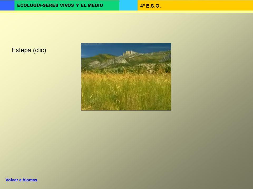 4º E.S.O. ECOLOGÍA-SERES VIVOS Y EL MEDIO Estepa (clic) Volver a biomas