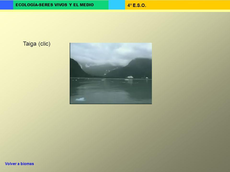 4º E.S.O. ECOLOGÍA-SERES VIVOS Y EL MEDIO Taiga (clic) Volver a biomas
