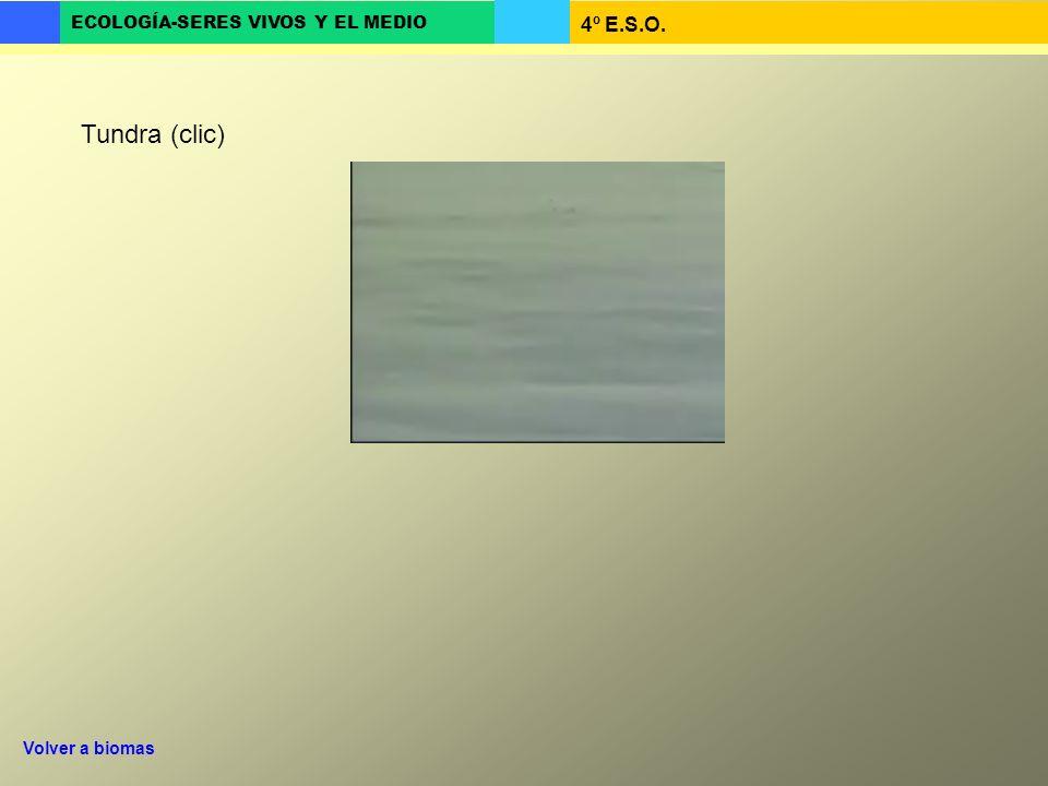 4º E.S.O. ECOLOGÍA-SERES VIVOS Y EL MEDIO Tundra (clic) Volver a biomas