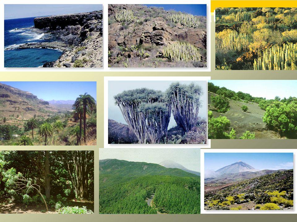 4º E.S.O. ECOLOGÍA-SERES VIVOS Y EL MEDIO Fotos de pisos climáticos de vegetación.