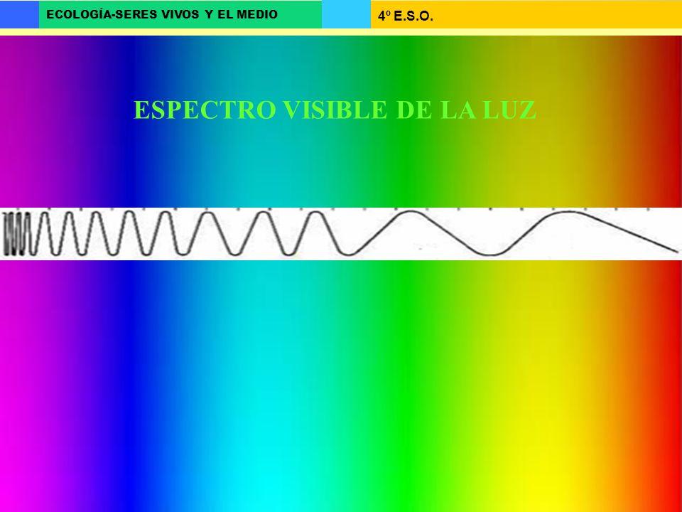 4º E.S.O. ECOLOGÍA-SERES VIVOS Y EL MEDIO ESPECTRO VISIBLE DE LA LUZ