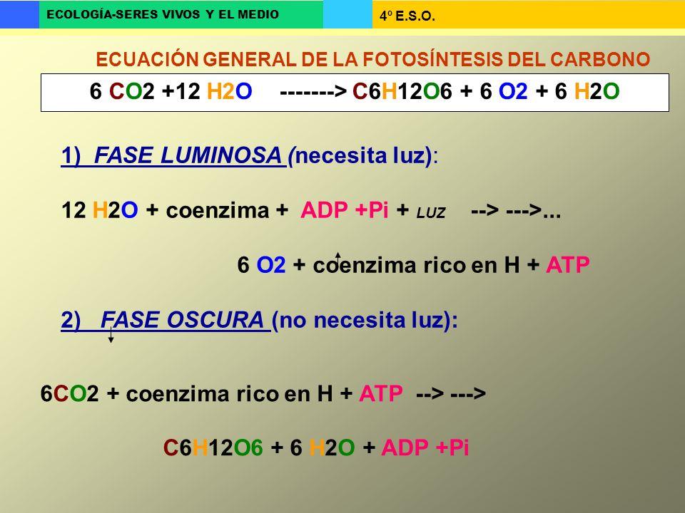 4º E.S.O. ECOLOGÍA-SERES VIVOS Y EL MEDIO 6 CO2 +12 H2O -------> C6H12O6 + 6 O2 + 6 H2O ECUACIÓN GENERAL DE LA FOTOSÍNTESIS DEL CARBONO 1) FASE LUMINO