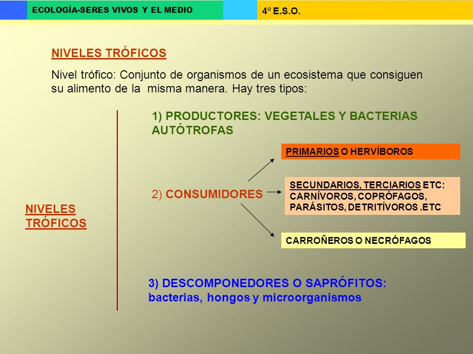 4º E.S.O. ECOLOGÍA-SERES VIVOS Y EL MEDIO NIVELES TRÓFICOS Nivel trófico: Conjunto de organismos de un ecosistema que consiguen su alimento de la mism