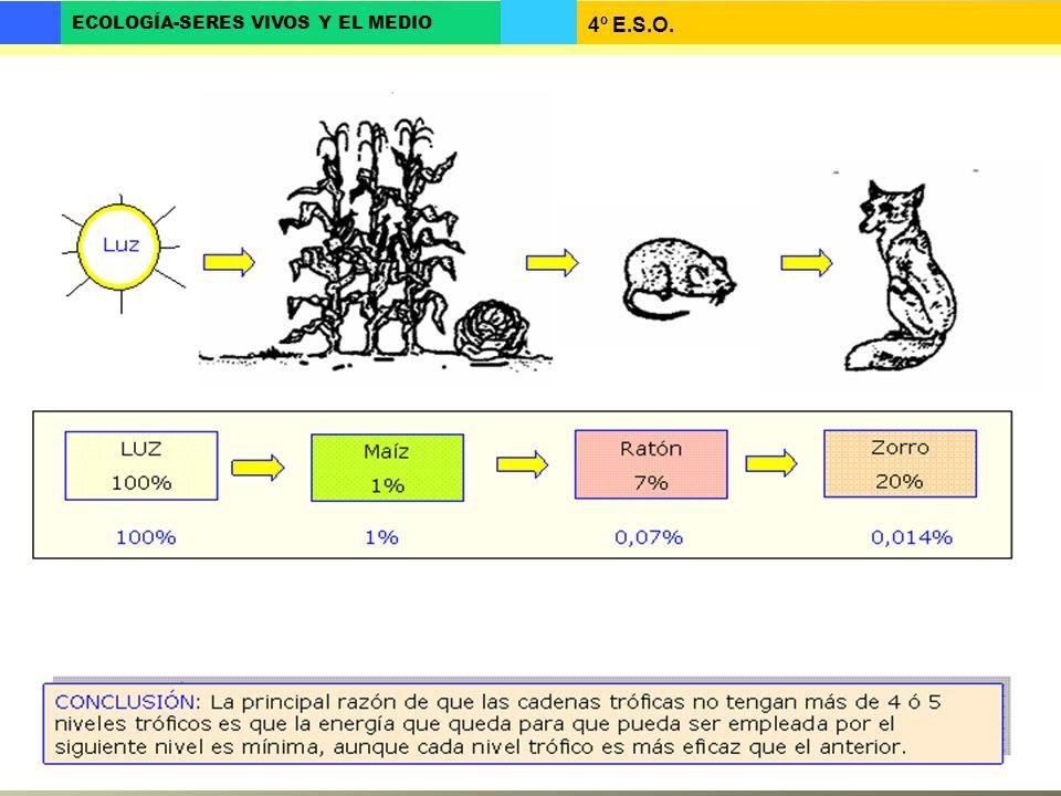4º E.S.O. ECOLOGÍA-SERES VIVOS Y EL MEDIO