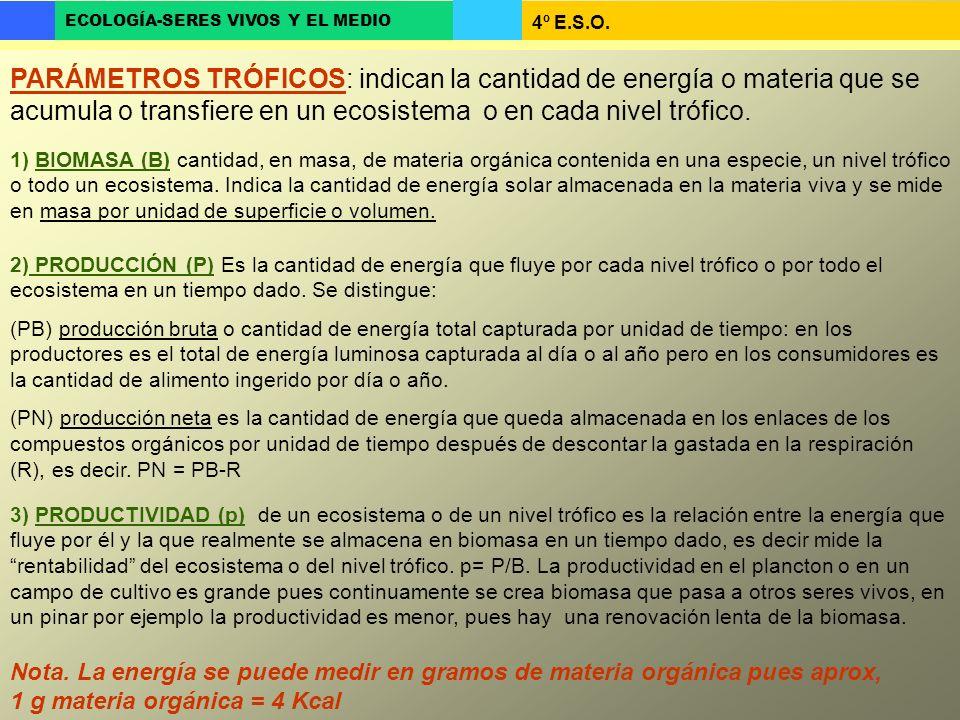 4º E.S.O. ECOLOGÍA-SERES VIVOS Y EL MEDIO PARÁMETROS TRÓFICOS: indican la cantidad de energía o materia que se acumula o transfiere en un ecosistema o