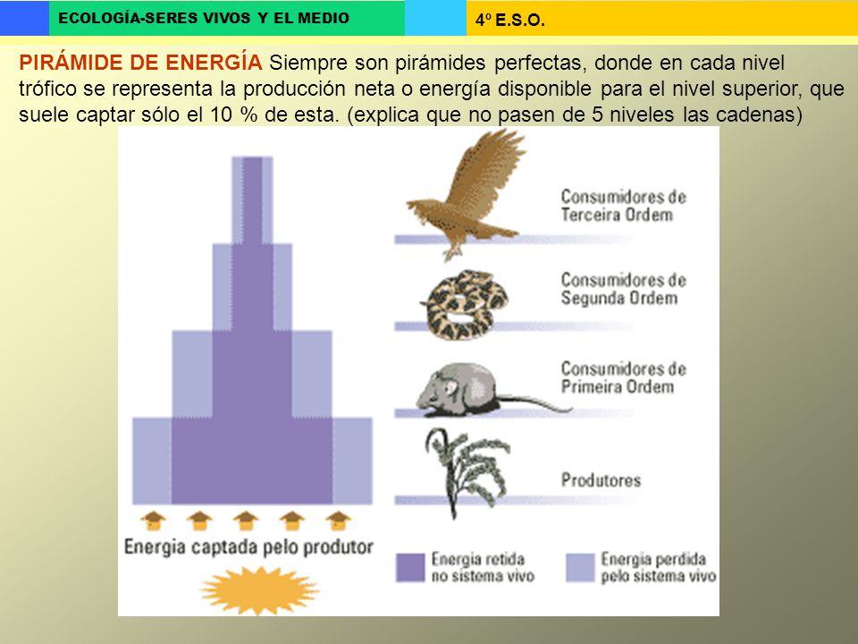 4º E.S.O. ECOLOGÍA-SERES VIVOS Y EL MEDIO PIRÁMIDE DE ENERGÍA Siempre son pirámides perfectas, donde en cada nivel trófico se representa la producción